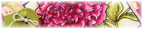 Razzleberry Peony crop