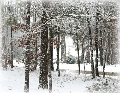 12-26-10 snowfall