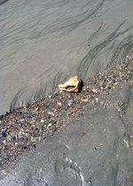 Path of shells
