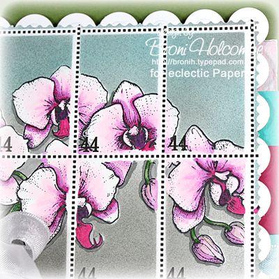 Orchid closeup 2