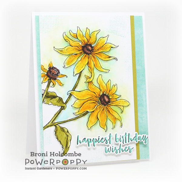 091516 PP Black-Eyed Susan