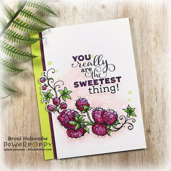 PP 080817 Raspberries