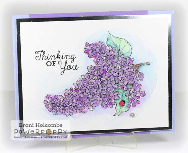 021515 IG French Lilac2 - broni
