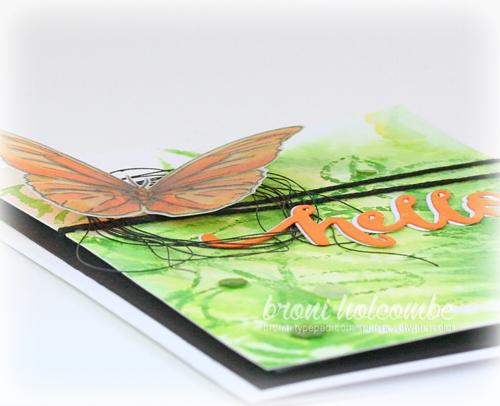 081915 CTD356 Butterfly closeup