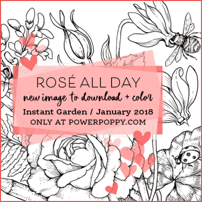 Rose All Day graphic