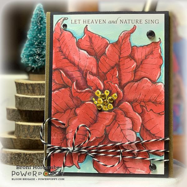 112519 PP Poinsettia XL